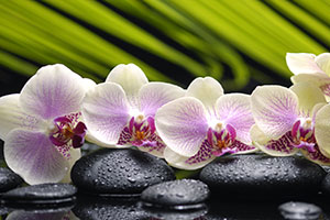 Orchids W0004